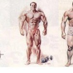 endomorph diet plan