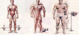 Are You an Endomorph? Here is Your Exercise and Diet Plan