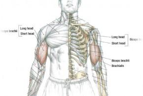 Biceps Workout Preachers Curl