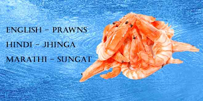 Jhinga-(Prawns-and-Shrimps)