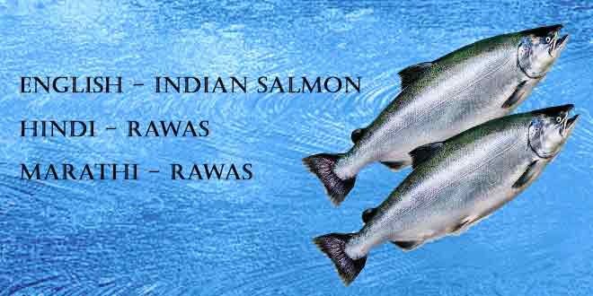 Top 10 Best Indian fishes or seafood rich in protein - IBB