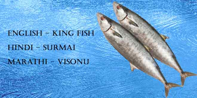 Surmai-(Seer-Fish-King-Mackerel-King-Fish)