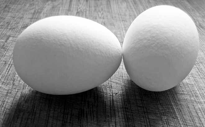 Eggs contain L Glutamine