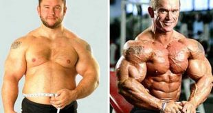 Bulking vs Cutting