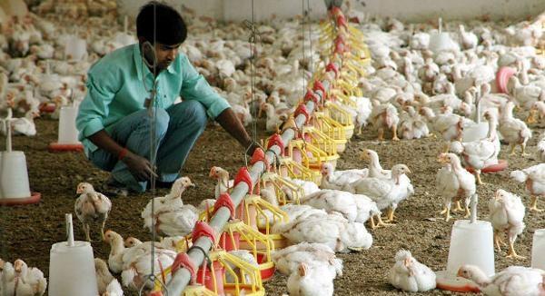 Chicken India